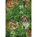 Tigers in Meadow