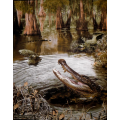 Swampy - Realtree Panel